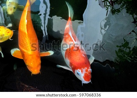 Fish pond stock photo 595856345 shutterstock for Colorful pond fish