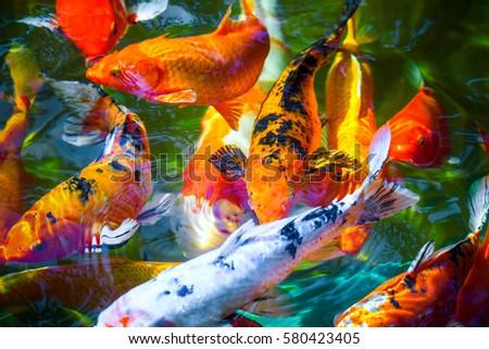 Colorful koi fish water ripple zen stock photo royalty for Artificial koi fish