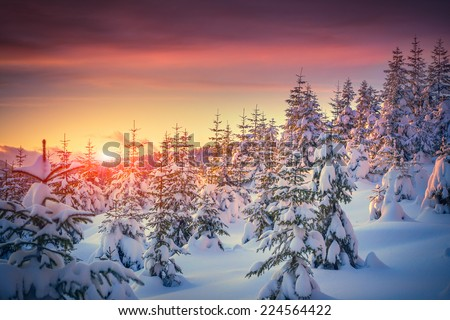 Colorful landscape at the winter sunrise in the mountain forest - stock photo