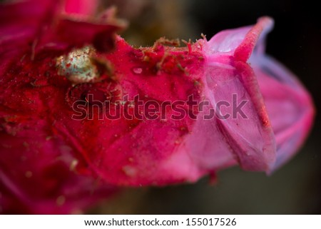 colorful leaf fish pink - stock photo