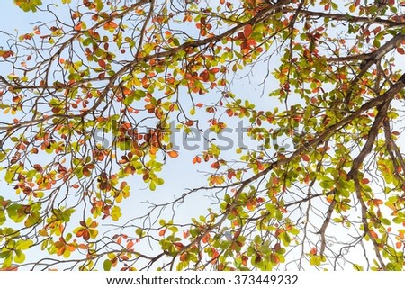 Colorful leaves and branches Tropical almond Background