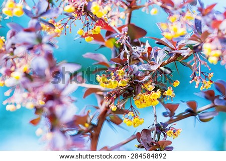 Colorful leaves and yellow flowers at a bush in early summer. Sweden - stock photo