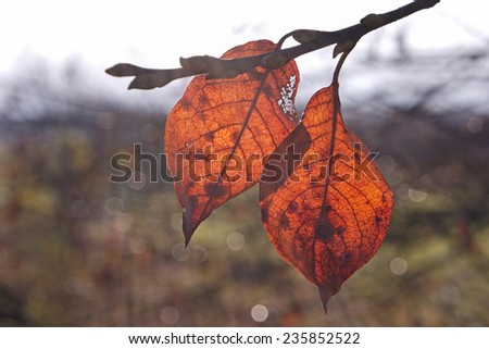 Colorful leaves in autumn - stock photo