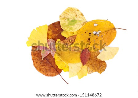 colorful leaves on a white background