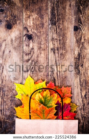 Colorful leaves on the trees background. - stock photo