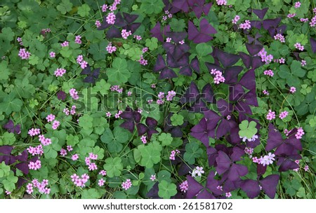 Colorful leaves with flowers / outdoors photography of colored foliage in summer time    - stock photo