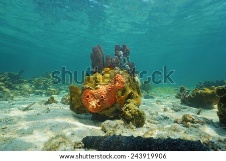 Colorful life under sea with sponges and corals, Caribbean - stock photo