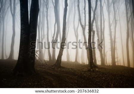 colorful light in a dreamy forest - stock photo