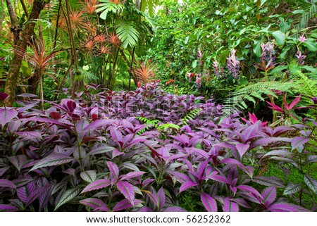 Colorful, lush, diverse tropical rain forest (Hawaii - Big Island) - stock photo