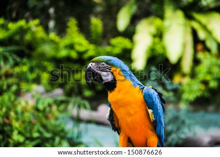 Colorful macaw on the green garden background.