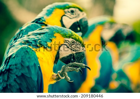 Colorful macaw parrots sitting on a row - stock photo