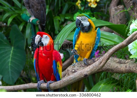 Colorful  macaws in the forest - stock photo