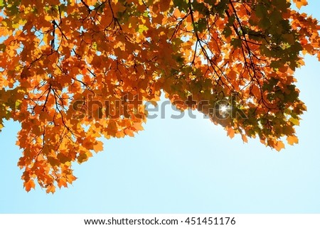 Colorful Maple Leaves on a Sunny Autumn Day - stock photo