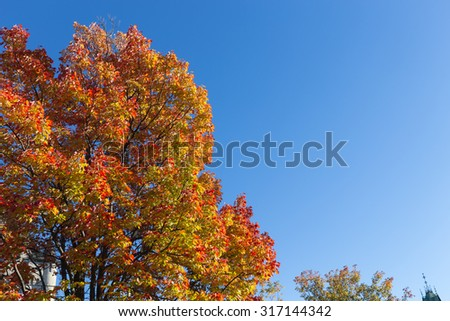 Colorful Maple Trees in the fall in Canada with copy space. - stock photo