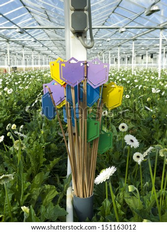 colorful markers for flowers in a greenhouse in klazienaveen, netherlands - stock photo
