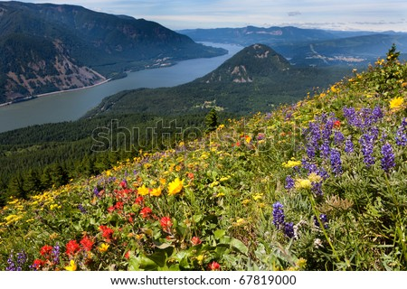 Colorful Meadows - stock photo