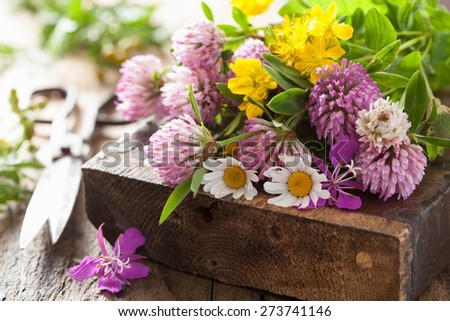 colorful medical flowers and herbs - stock photo