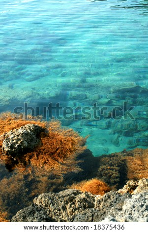 colorful moss on the coral reef with crystal clear sea - stock photo