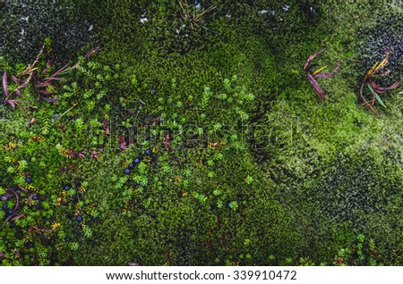 colorful moss textures from Iceland and Norway