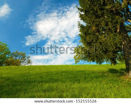 Colorful nature scenery with trees, grass and blue sky