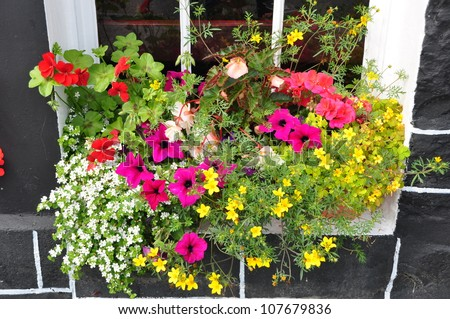 colorful of beautiful flowers in the window box