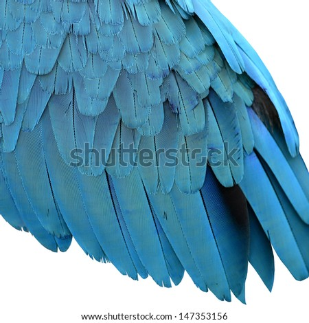 Colorful of Blue and Gold Macaw Feathers on white background - stock photo