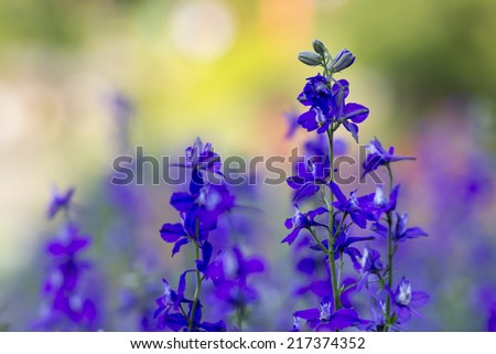Colorful of flowers - stock photo