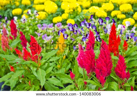 colorful of flowers in the park - stock photo