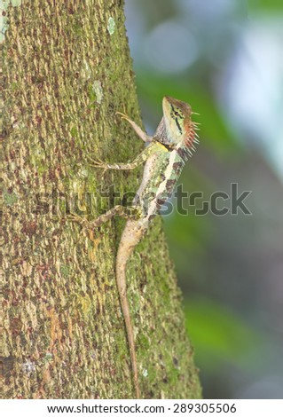 Colorful of Oriental Garden Lizard on branch