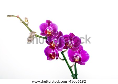 Colorful orchid on white background - stock photo
