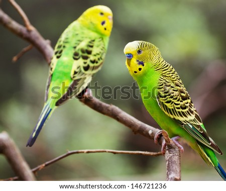 Colorful parakeet resting on tree branch - stock photo