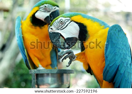 Colorful parrot birds