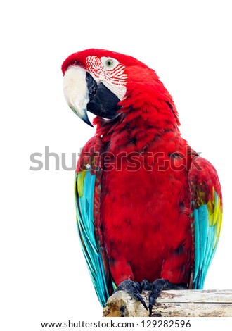 Colorful parrot isolated in white background - stock photo