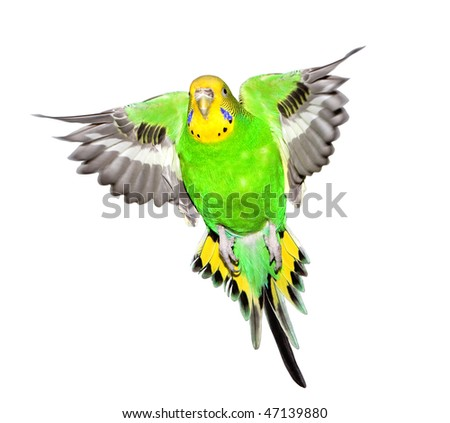 colorful parrot isolated on white background - stock photo