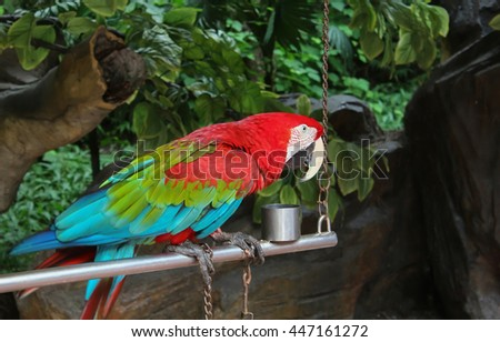 colorful parrot sitting on a perch on a background of green foliage - stock photo