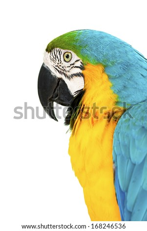 colorful parrots head closeup shot isolated on white - stock photo