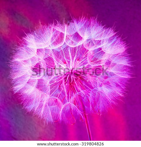 Colorful pastel background - Vivid color abstract dandelion flower -  extreme closeup with soft focus, beautiful nature details