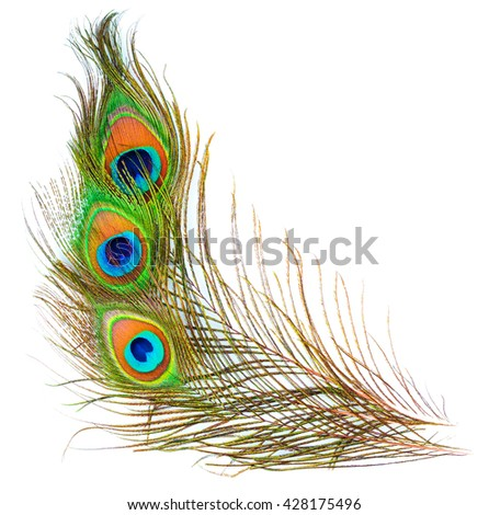 colorful pattern on peacock feather isolated on white background - stock photo