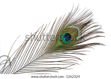 Colorful peacock feather abstract background