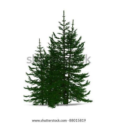 colorful  pine - stock photo