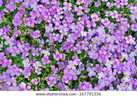 Colorful plants and leaves in spring park - stock photo