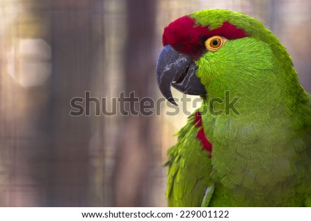 colorful portrait of a thick billed parrot with room for text