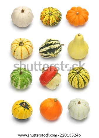 colorful pumpkin and squash collection, halloween background parts - stock photo