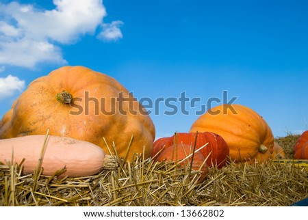 Colorful pumpkins on straw against the blue sky