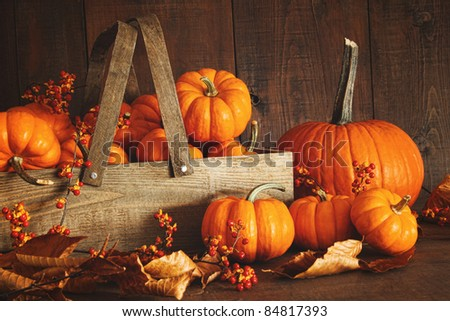 Colorful pumpkins with dark wood background - stock photo