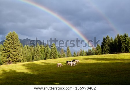 colorful rainbow over alpine pasture with sheep, Bavarian Alps, Germany - stock photo