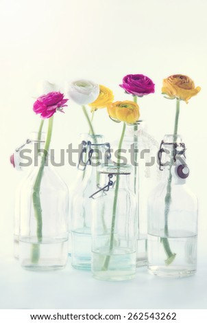 Colorful ranunculus flowers in glass bottles in bright background with hazy vintage editing - stock photo