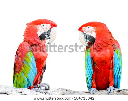 Colorful Red-and-green Macaw bird isolated on white background