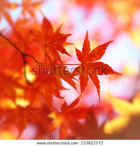Colorful red blurred autumn leaves. - stock photo