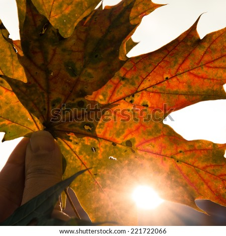 colorful red orange autumn leaves  background image